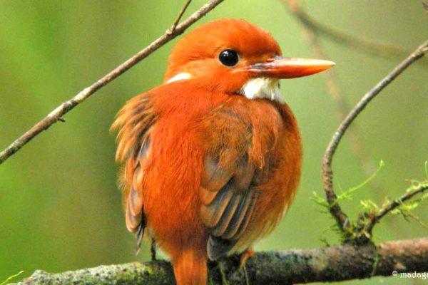 Madagaskar_Bird