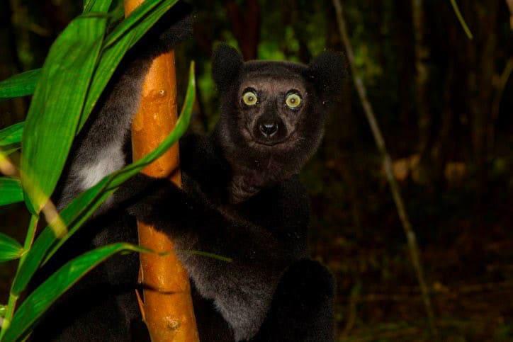 Madagaskar_jungle